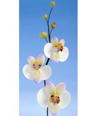 Branche Orchidée